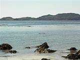 Otters At Kilninnian, Isle of Mull